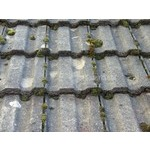 Roof Cleaning and Coating (2)
